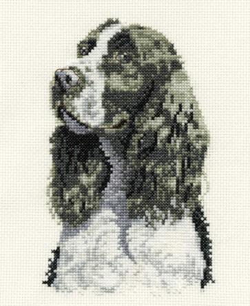Springer Spaniel - Dogs - BK137